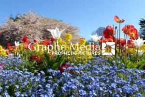 Panoramic Flower Bed